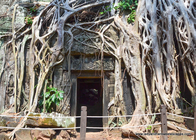 Ta Phrom in Siem Reap