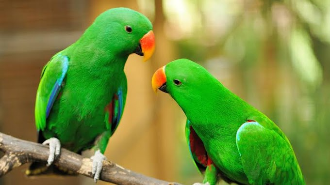 15 interesting facts about parrots