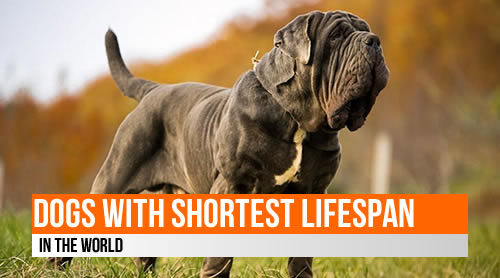 LIST: Dogs with the shortest lifespan in the world