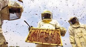 """Ως τις 18 Μαΐου οι αιτήσεις στην Αργολίδα για """"Οικονομική στήριξη της νομαδικής μελισσοκομίας"""""""