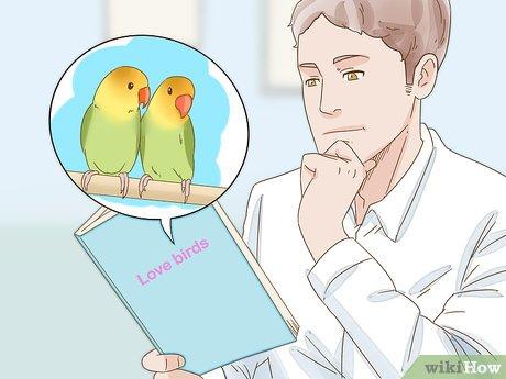 كورس مقدمة عن الطيور الأليفة للطلاب في كلية الطب البيطري مجاناً