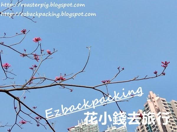 南昌公園紫花風鈴木
