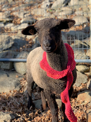 dark sheep with red wool scarf