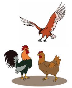 Ayam jantan, Ayam betina, dan Elang sedang berkumpul bersama www.simplenews.me