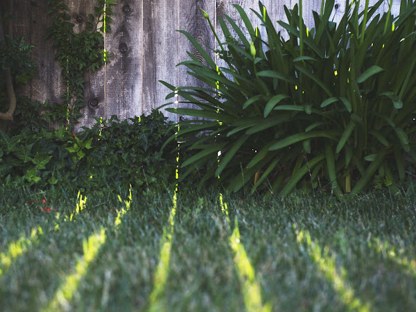 5 Ways to Provide More Shade In Your Backyard