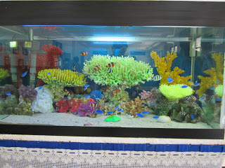 Pesona Aquarium Ikan Hias Air Laut Im Zin Srytu