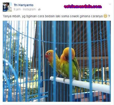Jawaban Konyol Sahabat Facebook, Tentang yang manakah Burung Yang Cewek ??