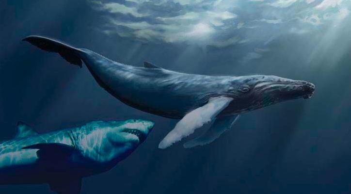 Fossil Whale Bone Reveals Prehistoric Shark Attack