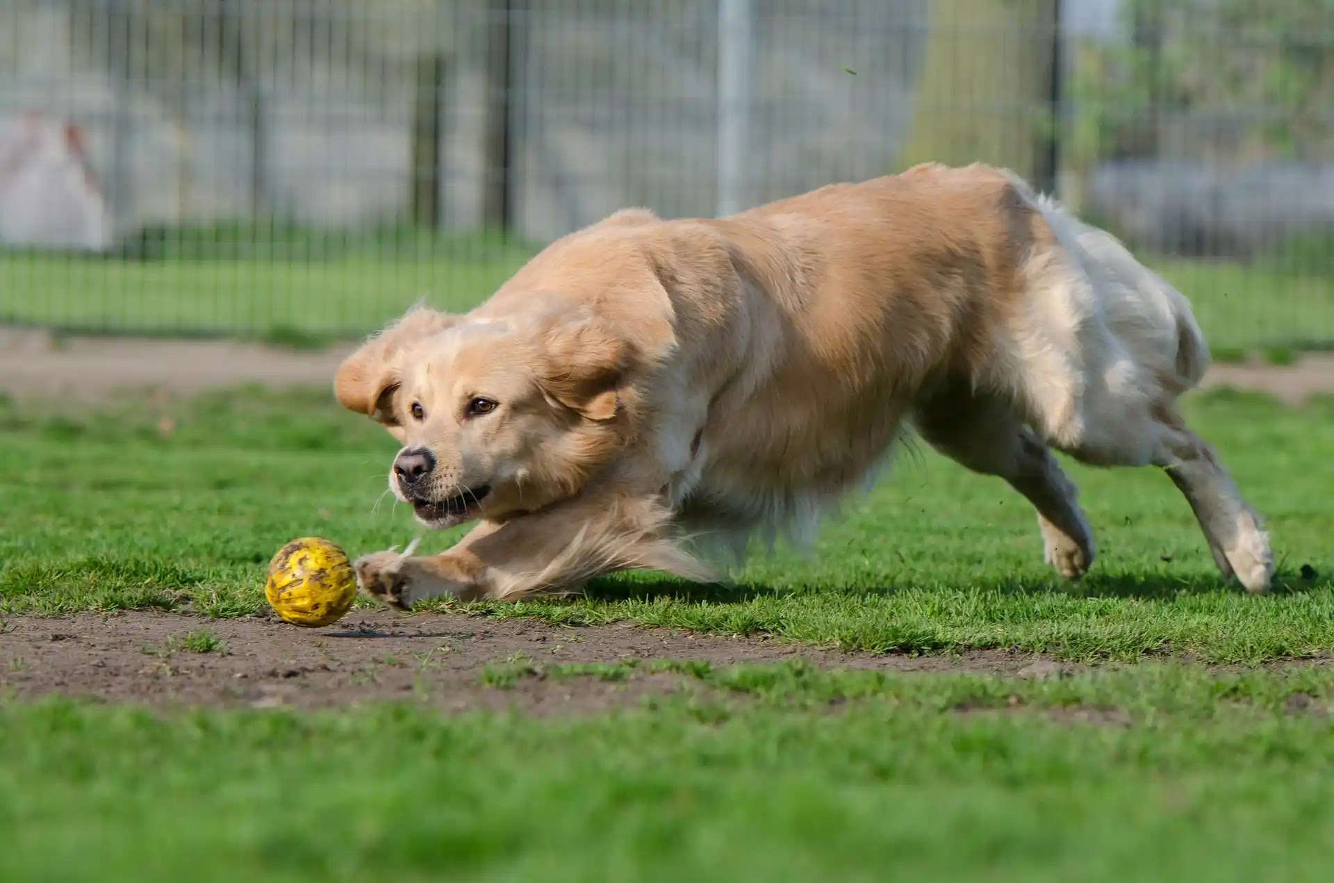 Dog Training Leashes