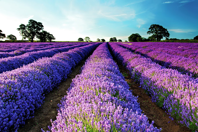 """Τα αρωματικά φυτά """"ανοίγονται"""" στις αγορές - Ο Χρήστος Τρίκκας από την Αργολίδα πίστεψε στο εγχείρημα"""