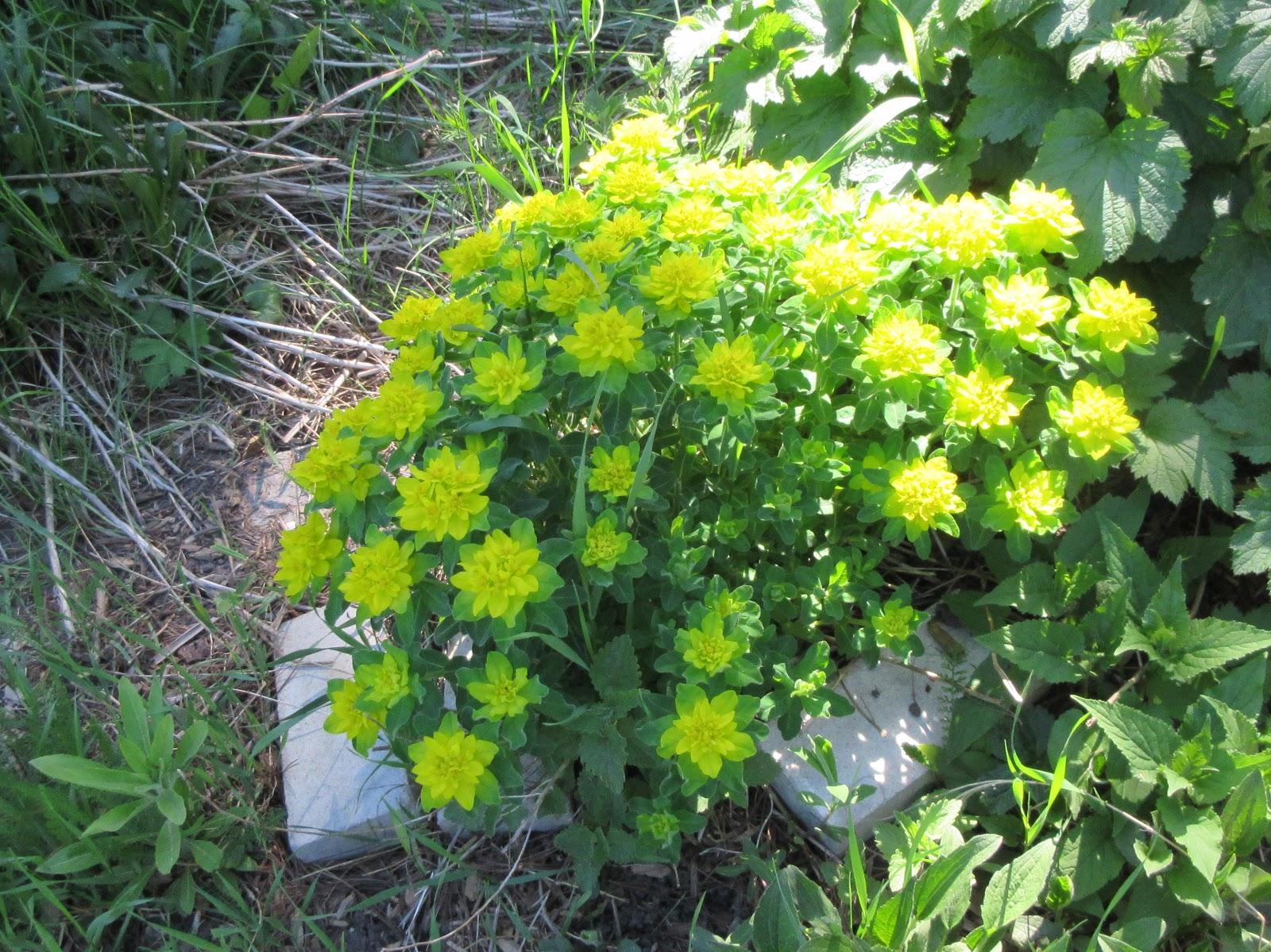 Marlenes Space Late Spring Flowers