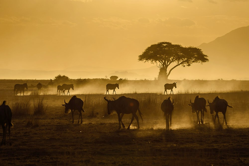 http://www.rudolf-hug.ch/content/fotogalerie/Travel/Africa%202014/index.html