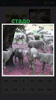 около дерева стоит небольшое стадо овец