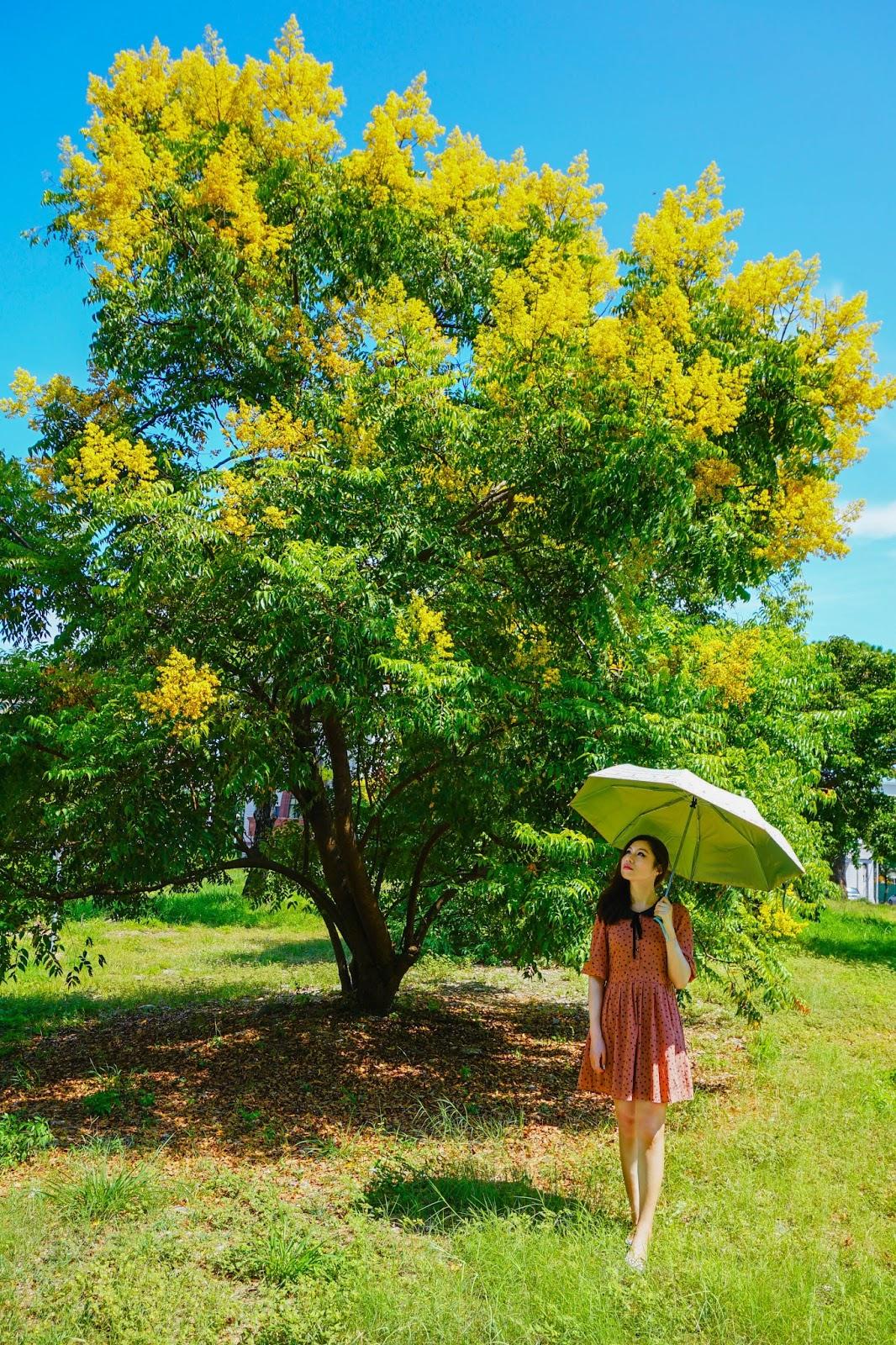 beautyanxiety.com-Flame%2BGold-rain%2BTree-DSC02723-beautyanxiety.com-Flame Gold-rain Tree