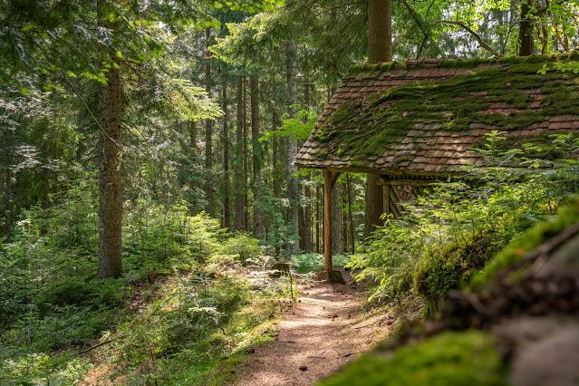 Premiumwanderweg Murgleiter | Etappe 4 von Schönmünzach nach Baiersbronn | Wandern nördlicher Schwarzwald 13