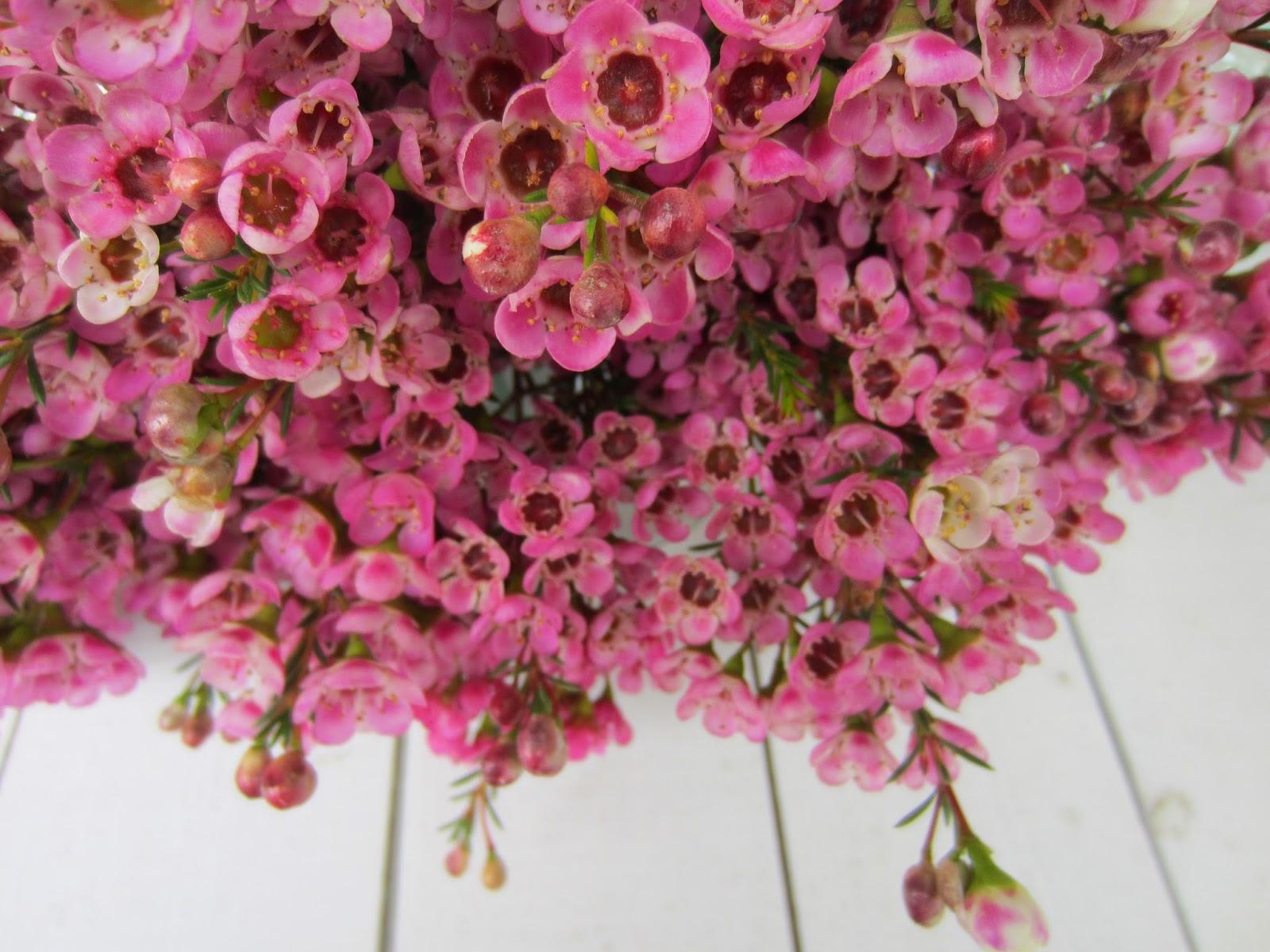 la petite boutique de fleurs fleuriste mariage lyon rose. Black Bedroom Furniture Sets. Home Design Ideas