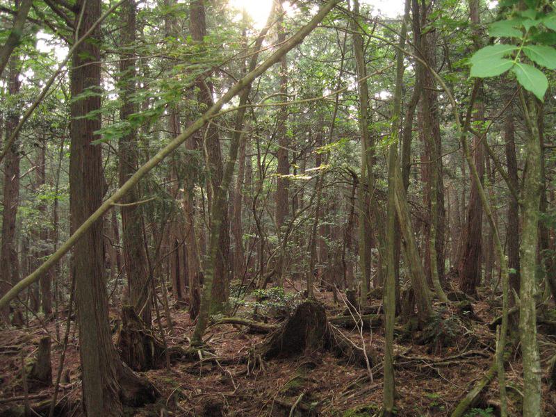 Aikagahara forest.