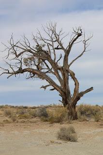 Margaret Kazmierczak writes about the barren fig tree