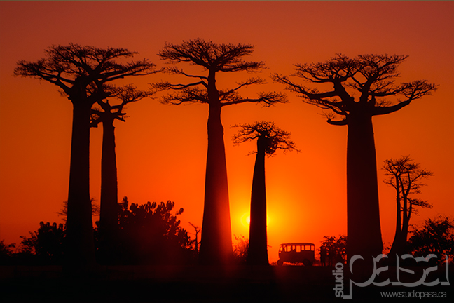 Busing through the Baobabs | Madagascar