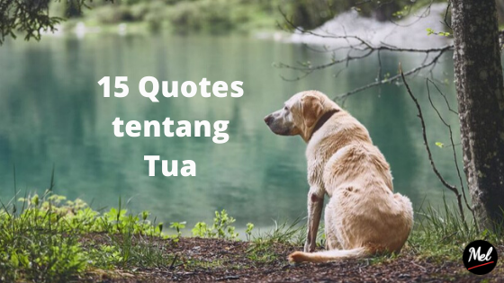 15 quotes tentang tua