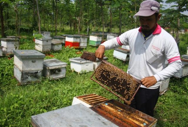https://tipspetani.blogspot.com/2018/10/cara-lengkap-peternakan-lebah-madu.html