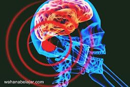 Memakai Ponsel dengan Waktu Lama Akan Berbahaya Bagi Otak