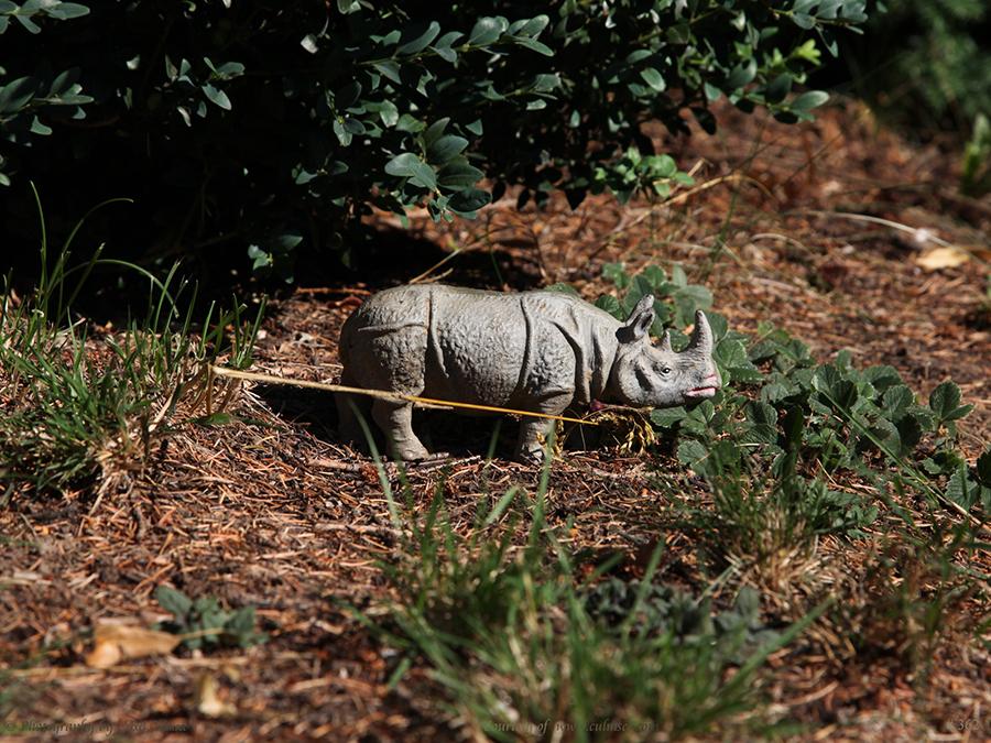 Breitmaulnashorn (Massefigur [Elastolin]) – square-lipped rhinoceros or white rhinoceros (Ceratotherium simum)
