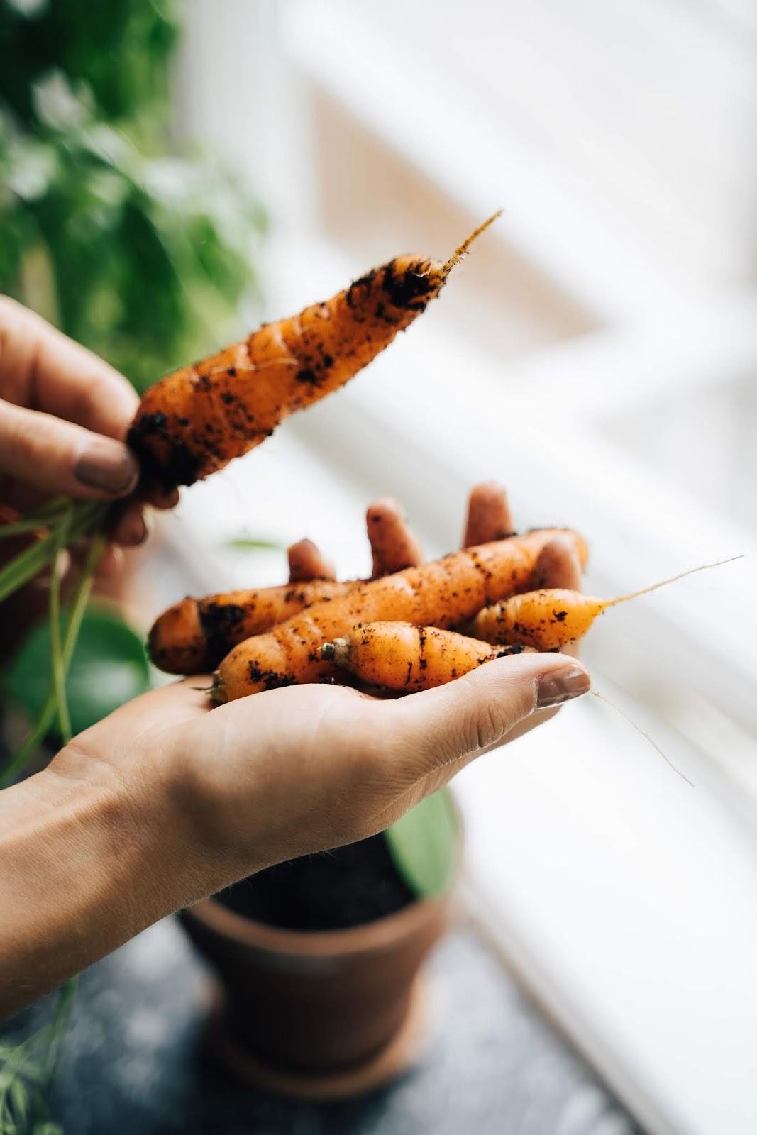 Zanahorias huerto urbano