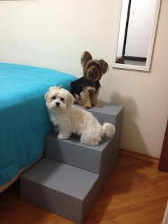escadas para cães com lesão de medula