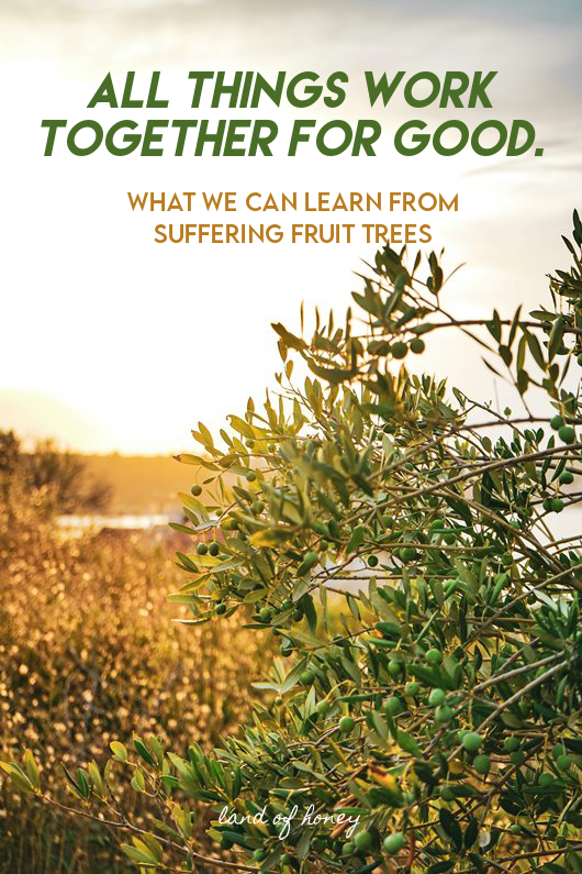 All Things Work Together for Good: What We Can Learn from Suffering Fruit Trees | Land of Honey