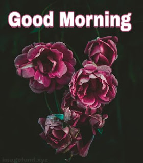Best Good Morning Images With Flower
