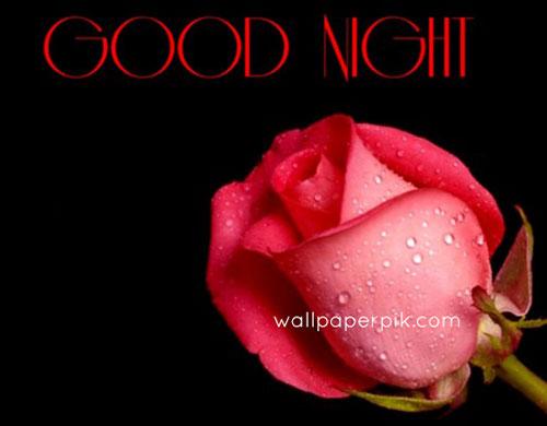 new good night images rose flower wallpaper