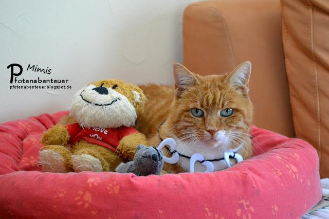 Katze Mimi verbringt den Valentinstag mit ihren beiden Freunden
