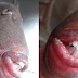 Unbelievable! See the pictures of a fish that has an Human being mouth and teeth