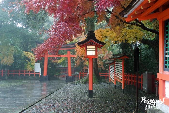 Lanterne et momijo rougeoyant, sanctuaire Usa-jingû, Oita