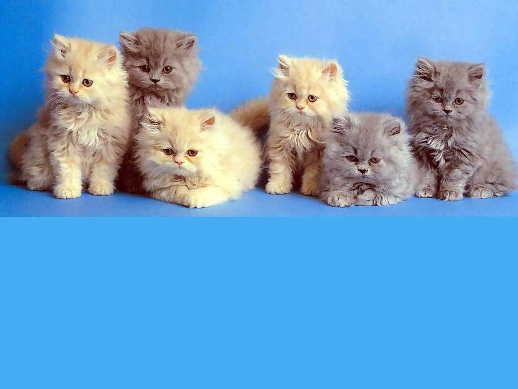 Compartiendo Fondos : Fondos De Gatitos Tiernos