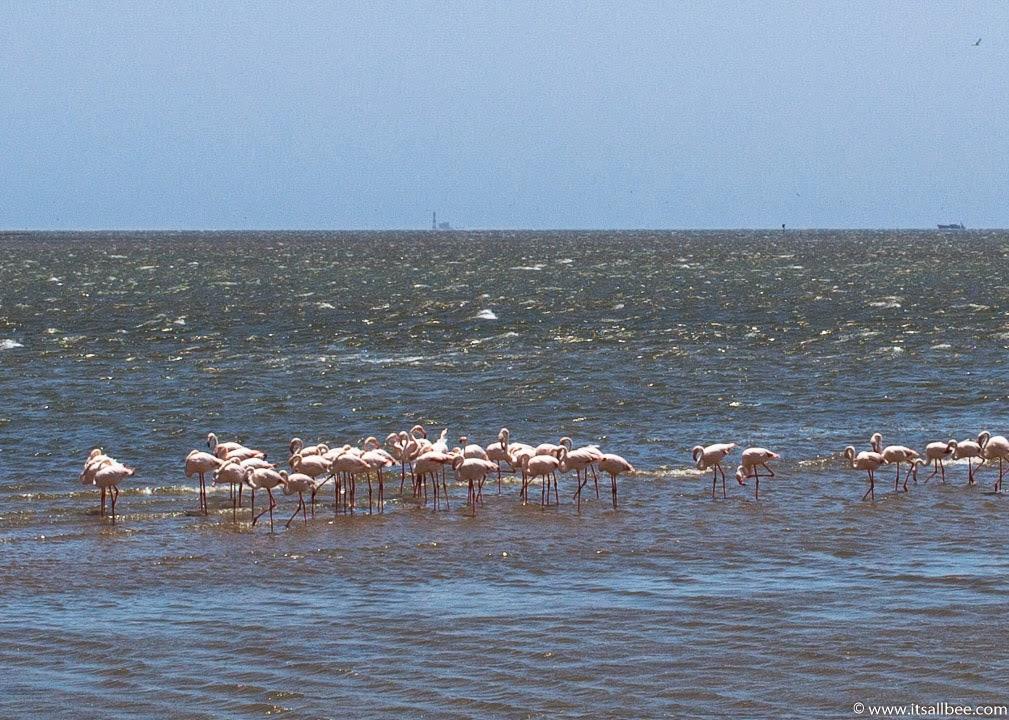 Walvis Bay Namibia | walvis bay flamingos