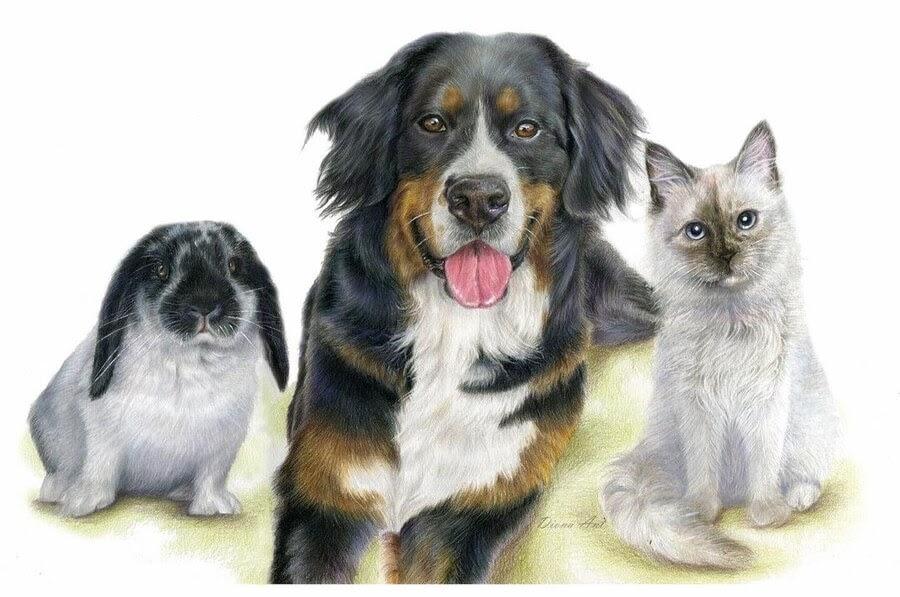 11-Dog-cat-rabbit-friends-Diona-Ant-www-designstack-co