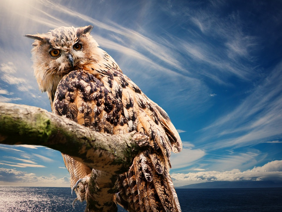 दुनिया के 10 शिकारी पक्षिओ के बारे में जानकारी - Top 10 Birds of Prey in Hindi,Amazing information and facts about Birds of Prey in Hindi - शिकारी पक्षिओ के बारे में रोचक तथ्य