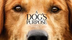 A dog purpose cover