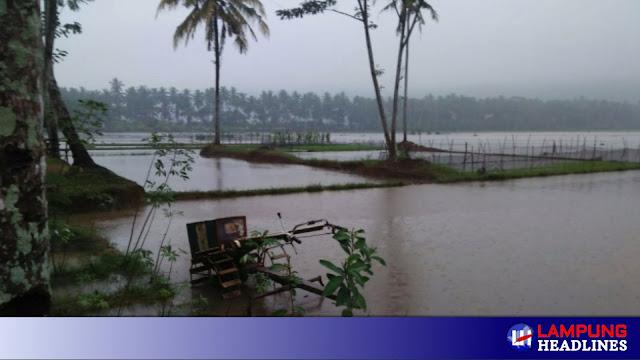 Banjir dan Tanah Longsor Semaka, Rendam 1.214 Hektar Areal Tanam Pertanian, Catur: Kita Upayakan Bantuan
