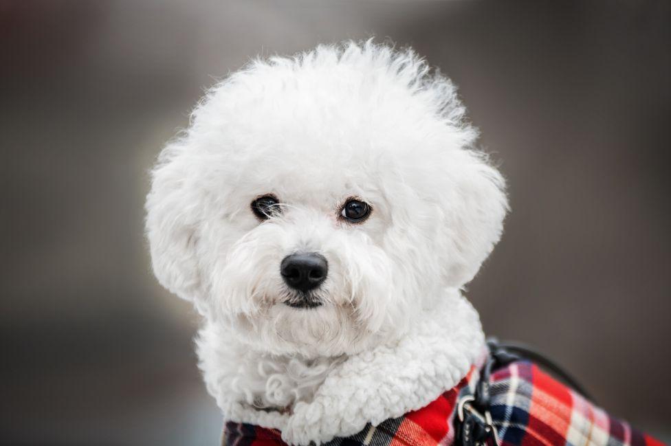 Las razas de perros que mejor se adaptan a un departamento