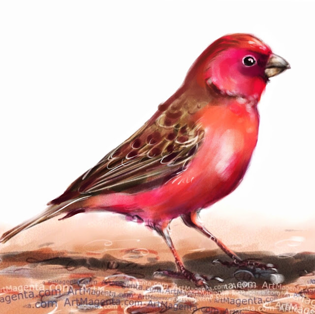 Sinai Rosefinch bird painting by Artmagenta