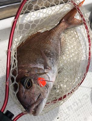 プレジャーボートでの海釣り 2020/6/27の釣果