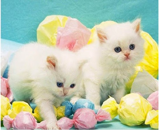 kucing dan anak kucing 1
