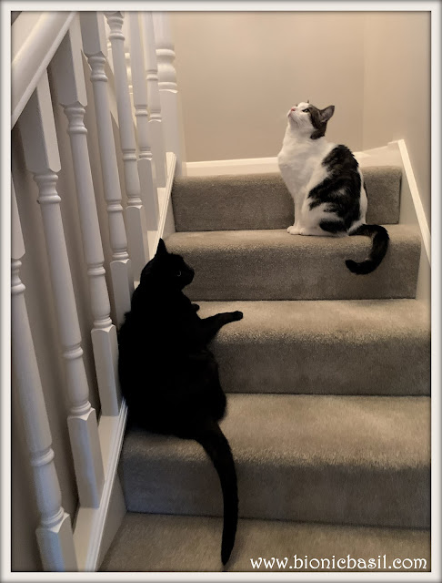 Queues On The Staircase ©BionicBasil® The Pet Parade 390