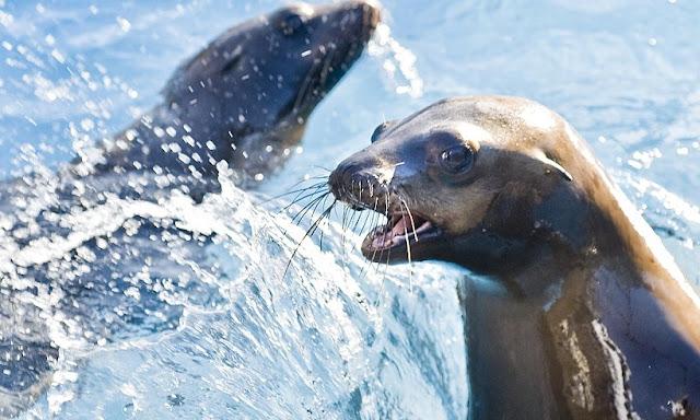 Pacific Marine Mammal Center em Laguna Beach