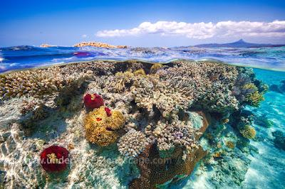 Vue sous marine des coraux à Mayotte.
