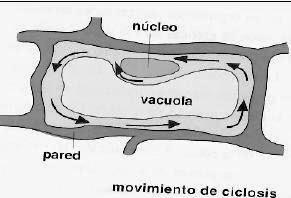 Entorno Vivo: Circulación Celular