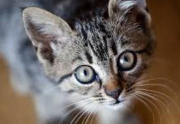 Arti Mimpi Melihat Kucing Menurut Ahli